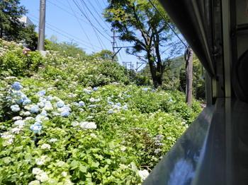 あじさい電車.jpg