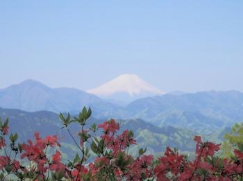 もみじ台(富士山とつつじ)2.jpg