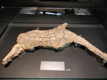 イタスクスの化石.jpg