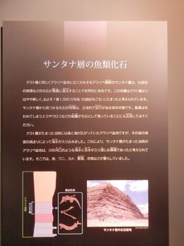 サンタナ層の魚類化石.jpg