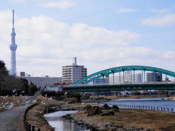 スカイツリーと江東新橋.jpg