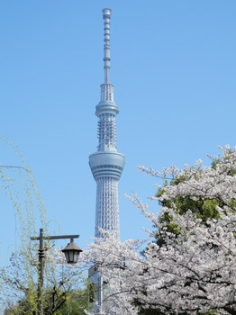 スカイツリー(大横川親水公園).jpg