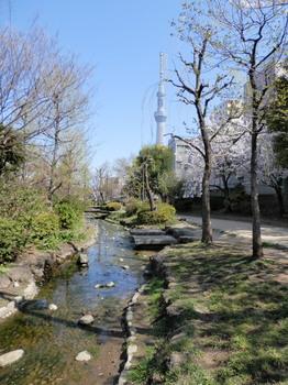 スカイツリー(大横川親水公園)2.jpg