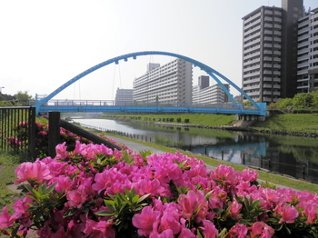 ツツジとふれあい橋.JPG