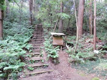トトロの森1号地.jpg