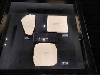 トンボの化石.jpg
