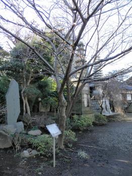プリンセス 雅(桜).jpg