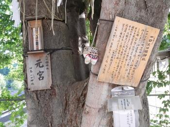 一口太田姫神社椋の木.JPG