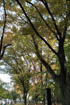 上野の森(紅葉).JPG