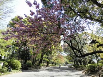 上野公園.jpg