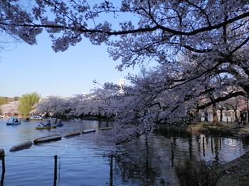 上野公園2.jpg