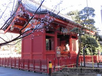 二天門に桜.jpg