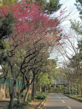仙台堀川公園(旧大石家 住宅付近).jpg