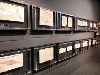 化石の展示.jpg