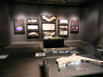 化石の展示2.jpg