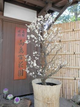 向島百花園(梅まつり).jpg
