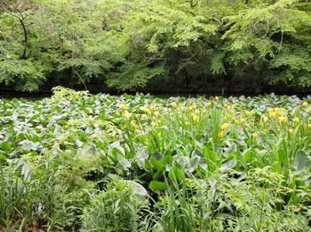 和田堀公園.jpg