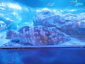 大きい魚.jpg