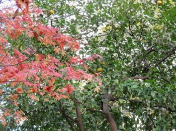 大森貝塚遺跡庭園10.jpg