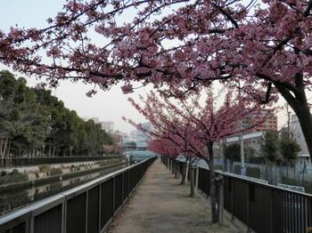 大横川(大横橋~茂森橋間).jpg