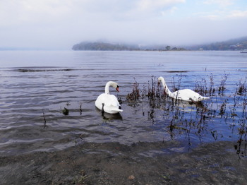 山中湖畔(白鳥の湖).jpg