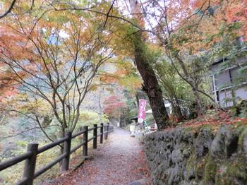 払沢の滝(遊歩道).jpg