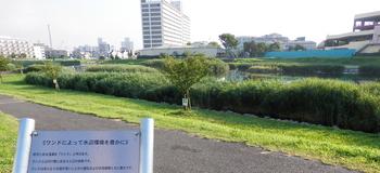 旧中川水辺公園.JPG