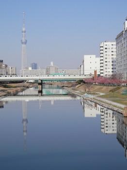 旧中川(ふれあい橋・スカイツリー・河津桜).jpg