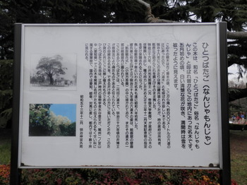 明治神宮外苑(なんじゃもんじゃの木説明書き).jpg