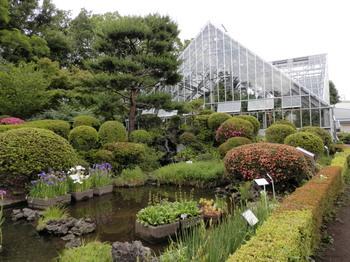東京都薬用植物園.jpg