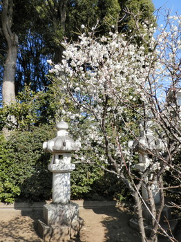 松陰神社(梅の木).jpg