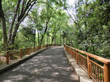 林試の森公園.jpg