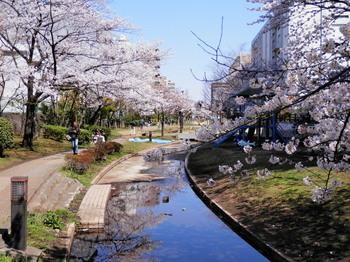 桜(大横川親水公園)2.jpg