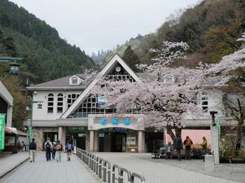 桜(清滝).jpg