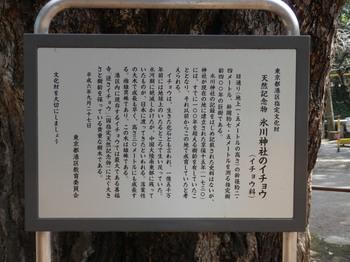 氷川神社のイチョウ(説明書き).jpg
