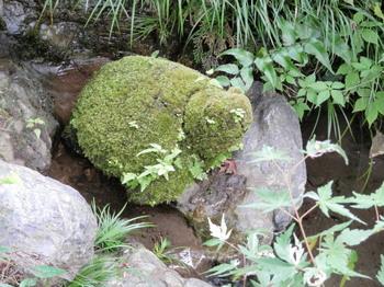 澤乃井園2.jpg