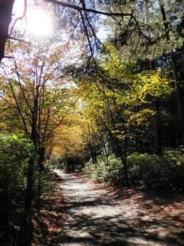 登山道と紅葉.jpg