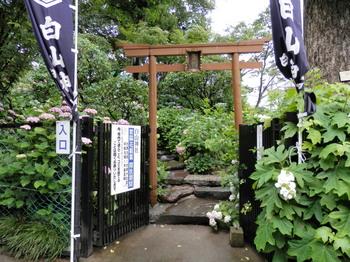 白山神社(富士塚).jpg