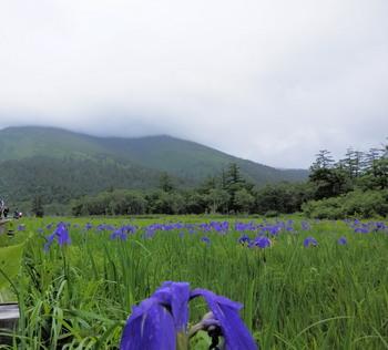 至仏山とアヤメ.jpg