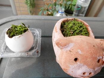 苔盆栽1.JPG