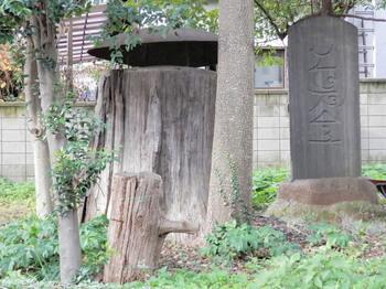 諏訪神社・袂杉.jpg