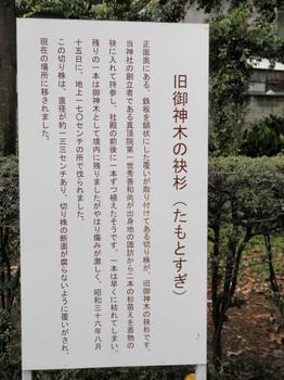 諏訪神社・袂杉(説明書き).jpg