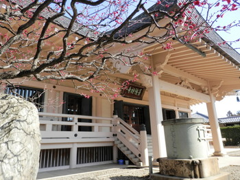 豪徳寺(本堂).jpg