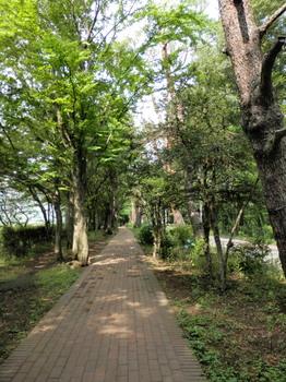 赤レンガの遊歩道と赤松並木.jpg