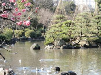 隅田公園の梅(墨田区側)2.jpg