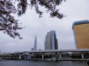 隅田公園(台東区側).jpg