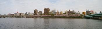 隅田川桜パノラマ写真.jpg