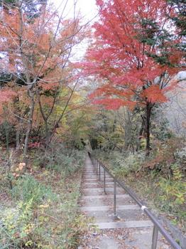 鳥居の階段(403段)の最上段から.jpg
